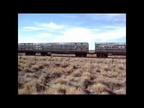 Cattle Train between Longreach & Winton Queensland + pics
