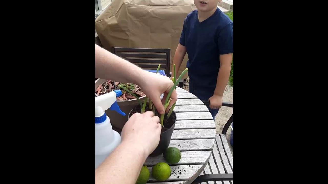 The Wartime Kitchen And Garden Kitchen Garden Update 1 Youtube