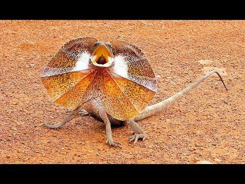 Coole Videos #373: Eidechse Attackiert Videofilmer / Freaky Lizard Attacks Man    ✪ Stern DuTube