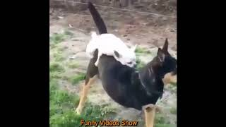 Funny Dog Mating With Other Animal - dogs meet different animals