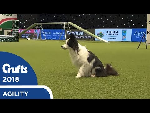 Agility - Crufts Team - Small Final Part 2 | Crufts 2018