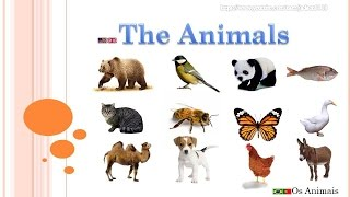 Learn about animals / animals for children / animals in english / animais em inglês