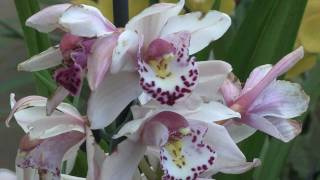 Tropical Extravaganza at Royal Botanic Gardens, Kew, London