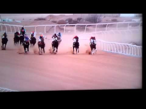 Horse in jeddah