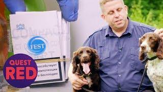 Drug Detection Dog Finds Stash Of Illegal Tobacco In Sussex | Dog Detectives