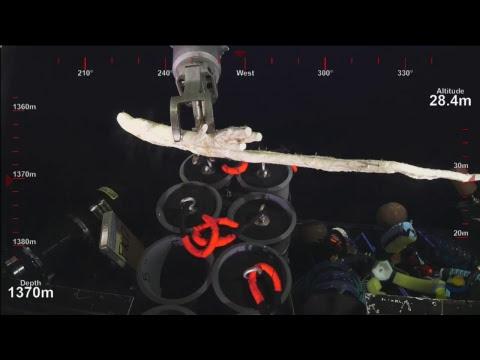 ROV SuBastian Dive 079- Deep Sea Corals of PIPA