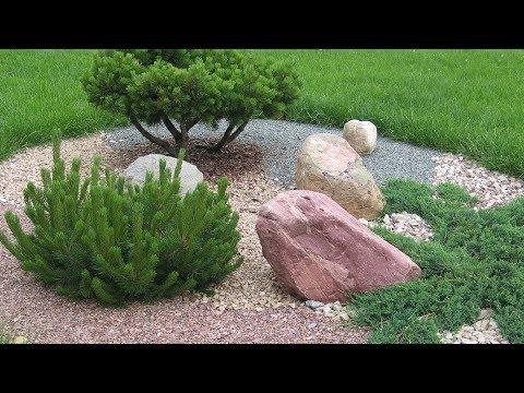 Хвойные в вашем саду  Эпин, Циркон   обработка весной