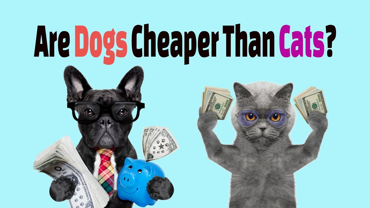 Cats or Dogs: Which Are More Expensive?   Money Talks News