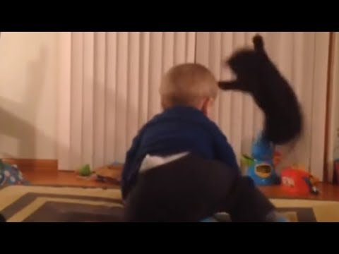 Cat has hilarious response to baby's dancing