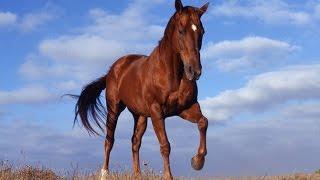 прикольное видео лошадей