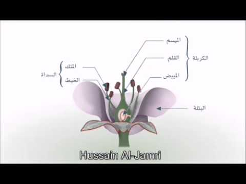 التكاثر الحنسي في النباتات الزهرية