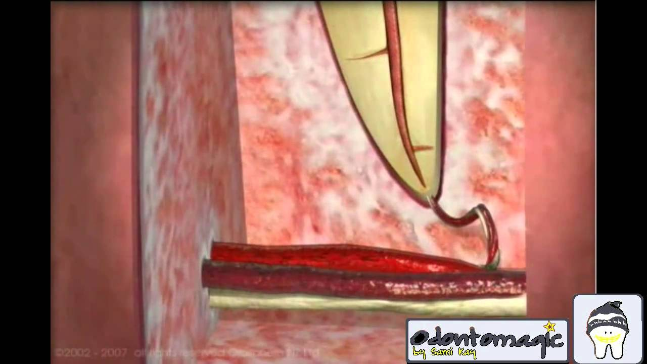 1 ANATOMIA DENTAL.mpg - YouTube