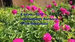 8 июня 2019/ежедневник Ангелов/Лена Воронова