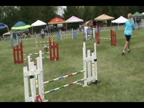 2012 Miniature American Shepherd Nationals Agility