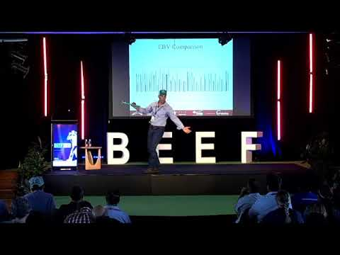 Why YOU should AI your heifers! - Video BEEF2021