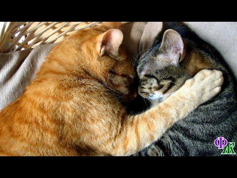Вопрос: Котик не хочет лезть в подпол по естественным надобностям. Что делать?