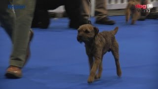 Manchester Championship Dog Show 2016 - Terrier group