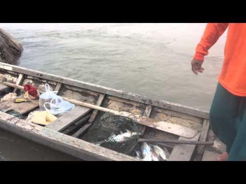 เซียนแหวงเย่อกับปลายาง