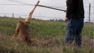deer stuck in fence