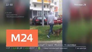 Владелец собаки избил женщину за просьбу убрать за питомцем - Москва 24