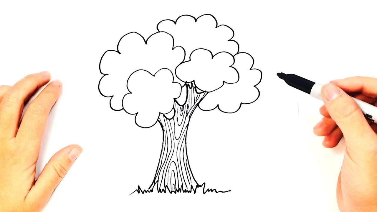how to draw a tree step by step easy drawings youtube