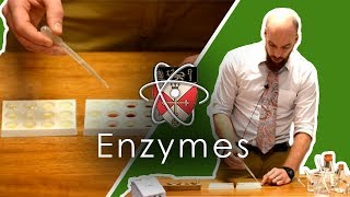 Enzymes - GCSE Science Required Practical