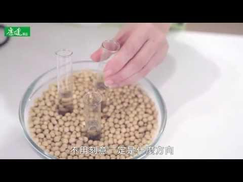 【康健來了】食材新生 豆類創意秀花藝