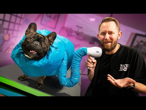 10 Useless Products People Actually Use on Their Pets!