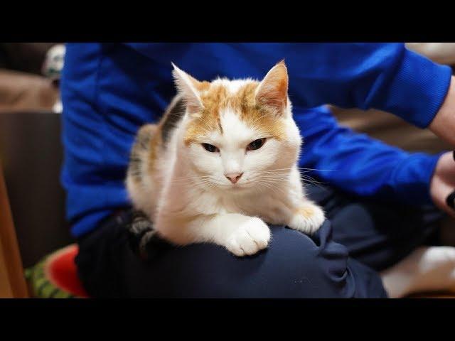 友人が好きすぎてしがみついて寝ちゃう三毛猫がかわいい