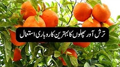 Orange Farming in Pakistan: Modern Agriculture Technology by Bakhabar Kissan