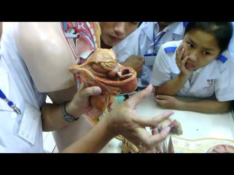 thực hành giải phẫu - đáy chậu 4