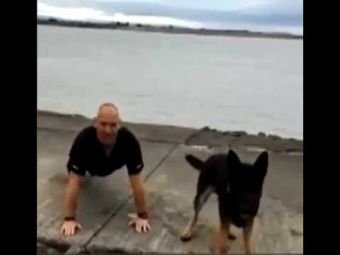 Police dog takes part in 22 push-ups challenge