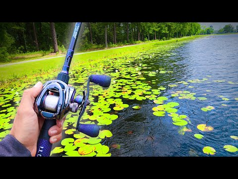 Searching For GIANT Bass In PADS! (Lake Fishing)