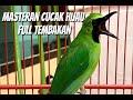 Masteran Cucak Ijo Full Tembakan  Mp3 - Mp4 Download