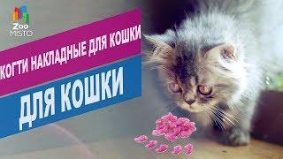 Когти накладные для кошки | Обзор накладных когтей для кошек