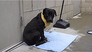 Он лежал и смотрел в пол, ожидая врачей с последним уколом… Но неожиданно пёс увидел животное