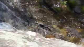 Fallingwater Cascades VA 2 by Judy Sutton (Virginian Photograhy)