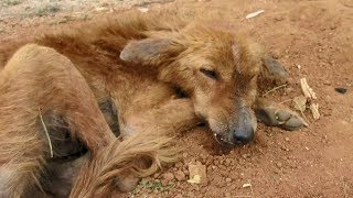 Dog starving from broken jaw rescued