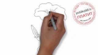 Как нарисовать полевой цветок карандашом поэтапно