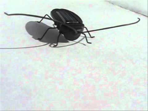 Cucaracha Solar, Gadget Solar Exclusivo de tienda8.cl