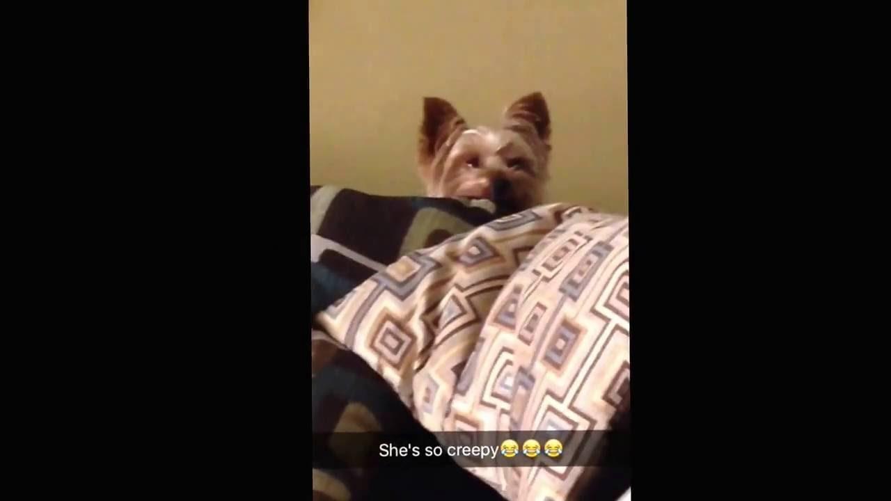 This Is My Creepy Dog Hershey If U Go On Animaljam Name Hershey15 Plz Subscribe Thank