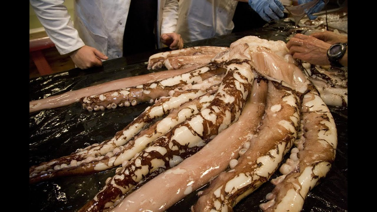 Science Live: Colossal Squid - YouTube