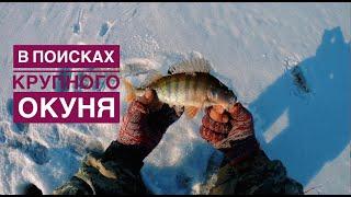 Поиск крупного окуня Окунь на мормышку Трудовая рыбалка