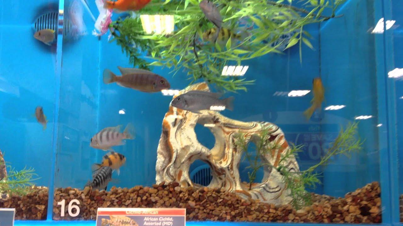 Freshwater fish for aquarium petsmart - Freshwater Fish For Aquarium Petsmart