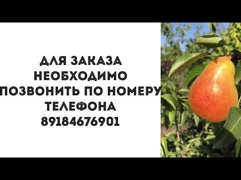 Саженцы г. Краснодар  саженцы почтой  сад и огород  опт и розница 