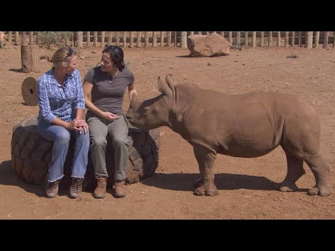 Protecting orphaned baby rhino from poachers