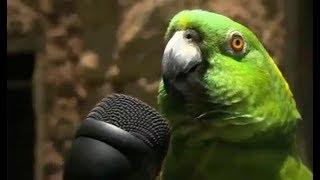 Os Cinco Melhores Papagaios Da Música Gospel