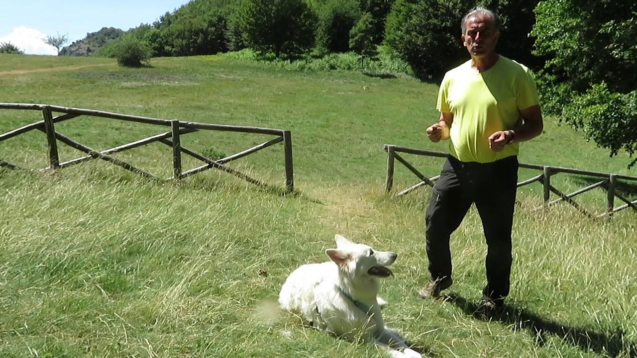 Pettorine per cani: come si mettono e tipologie - Idee Green