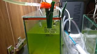 Разведение креветки Амано   Перевожу на пресную воду   Снова проблемы