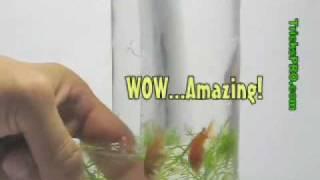 DIY教學:教你製作真空保特瓶魚缸?!不信就來試試看! thumbnail